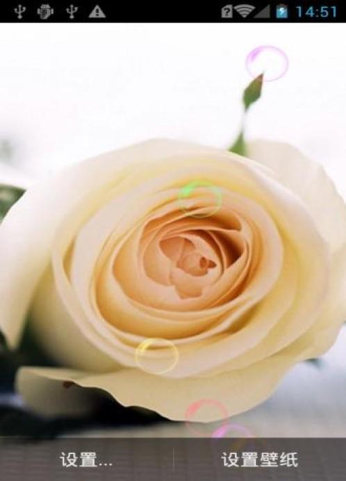 恋玫瑰花动态壁纸免费下载-手机恋玫瑰花动态壁纸