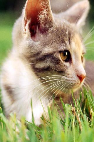 可爱猫咪壁纸免费下载-手机可爱猫咪壁纸安卓版下载